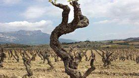 Una jornada sobre la viticultura de medición y  el trabajo a pie de viña