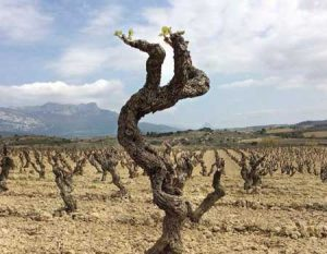 Tecnovino viticultura de medicion Julian Palacios