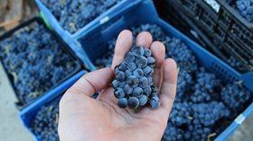 Sierra de Francia, la nueva ruta para descubrir los vinos de la D.O.P. Sierra de Salamanca