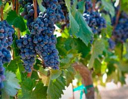 Tecnovino oferta formativa online en vino de ESAH enologia