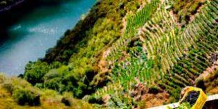 Ecovine, un proyecto que desarrolla la tecnología de los drones al servicio del viñedo