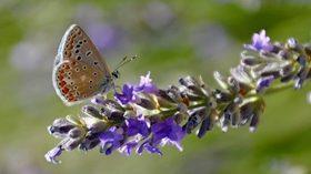 """Abadía Retuerta protege la biodiversidad de su entorno participando en la """"Operación Polinizador"""""""