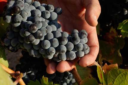 Tecnovino vinos Ternario Bodegas Venta la Vega 3