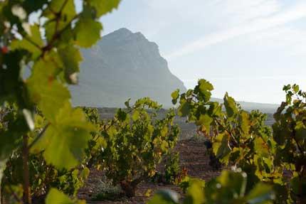 Tecnovino vinos Ternario Bodegas Venta la Vega 4