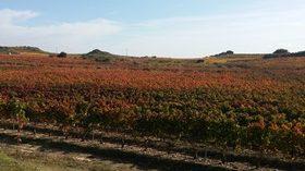 Vinysost: gestión sostenible para incrementar la competitividad de las bodegas españolas