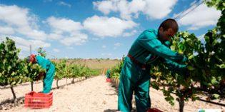 """El espíritu """"eco"""" de Bodegas Luzón: certificado de sostenibilidad y vinos ecológicos aptos para veganos"""