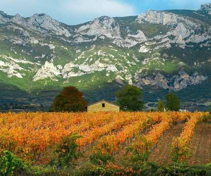 Tecnovino Gomez Cruzado viejos vasos Rioja Alavesa