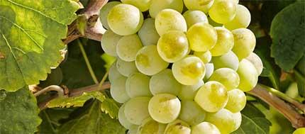 Tecnovino vino Camino de Magarin Bodega Magarin verdejo