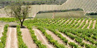 Sube un 1,1% el precio medio del viñedo en 2016