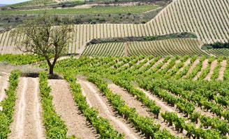 Tecnovino DOCa Rioja vinedos singulares 328x200