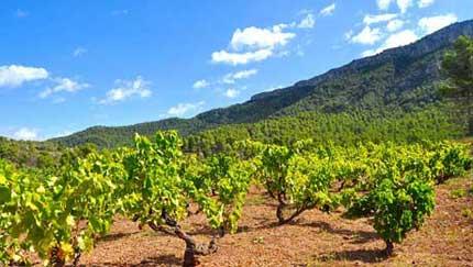 Tecnovino producción vitivinícola sostenible Life Priorat Montsant 1