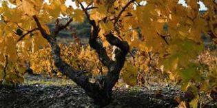 Europa apuesta por un proyecto sobre sostenibilidad vitivinícola de la Comarca del Priorat