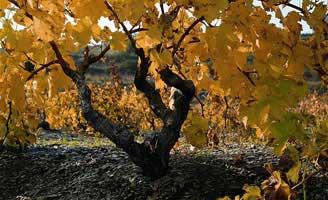 Tecnovino sostenibilidad vitivinicola Life Priorat Montsant 328x200