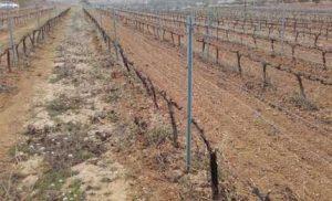 Tecnovino eventos sector vitivinicola jornada Irta Incavi