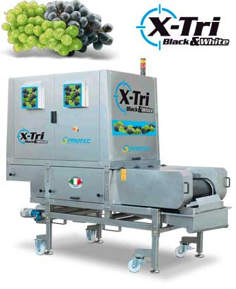 Tecnovino seleccion de uva X Tri Defranceschi Sacmi 1