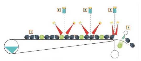 Tecnovino seleccion de uva X Tri Defranceschi Sacmi 3