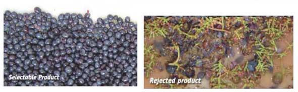 Tecnovino seleccion de uva X Tri Defranceschi Sacmi 4