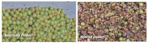 Tecnovino seleccion de uva X Tri Defranceschi Sacmi 5