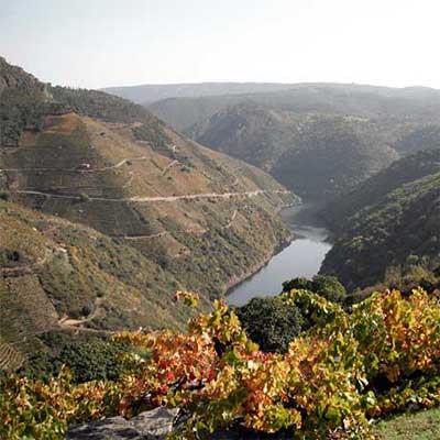 Tecnovino Mencia 2016 Bodegas Maset paisaje