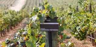 Finca Constancia pone en marcha una microbodega experimental para analizar la adaptación de algunas variedades de uva