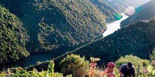 UPA considera que el clima merma sobre un 20% la producción de uva en España