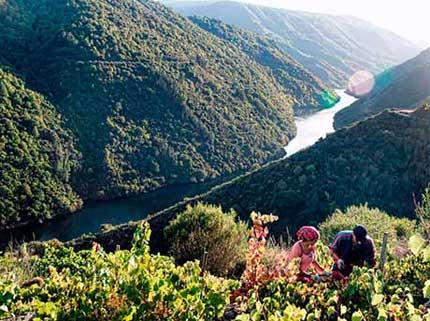 Tecnovino produccion de uva en Espana vendimia