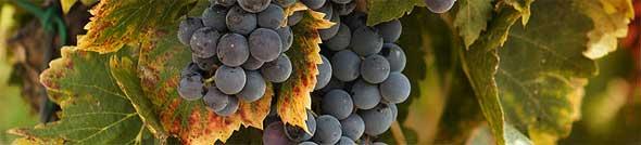 Tecnovino productor mundial de vino prevision