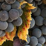 Ferias y eventos vitivinícolas en noviembre y diciembre de 2017