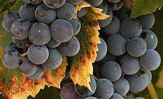 Tecnovino productor mundial de vino prevision 328x200