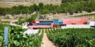 Científicos españoles elaboran un vino libre de histamina que no da dolor de cabeza
