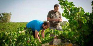 Bodegas Alvear y Envínate buscan la revolución de los vinos de la Sierra de Montilla
