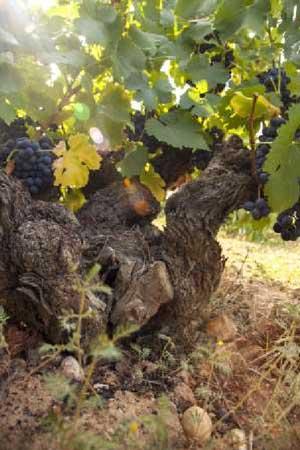 Tecnovino Marques de Riscal Vinas Viejas vino rosado 2