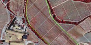 Cómo mitigar los efectos del cambio climático en la viticultura ecológica
