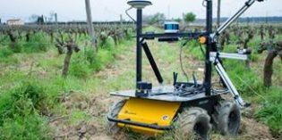 Investigadores de Eurecat desarrollan un robot para la monitorización y el mantenimiento del viñedo