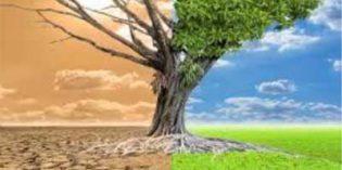 """Desde Fenacore piden """"prevenir y no solo lamentar"""" los efectos de la sequía"""