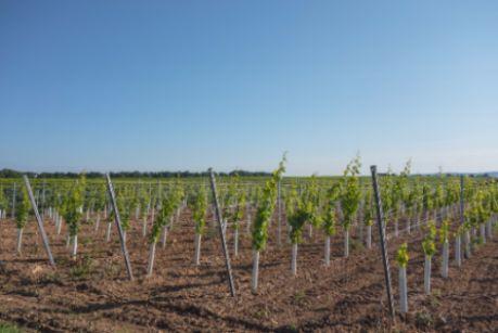 Tecnovino nuevas plantaciones
