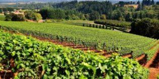 España dedicó el pasado año al viñedo ecológico, el 11,1% de la superficie total de cultivo