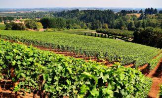 Tecnovino viñedo ecológico