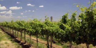 El proyecto de viticultura 4.0, Go Big Data Vino, aumenta la calidad de la uva y reduce los costes