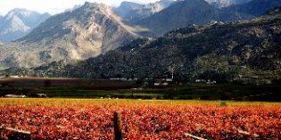 Sudáfrica, uno de los 10 primeros países productores de vino a nivel mundial