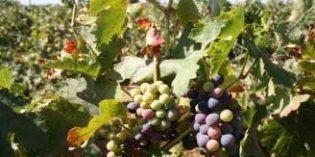 Los diez equipos y productos para la actividad vitivinícola más vistos en Tecnovino en 2017