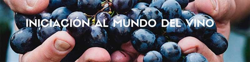 Tecnovino Curso de Iniciacion al Mundo del Vino 2019 ESHBI
