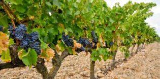 El proyecto europeo LIFE NADAPTA guiará a Navarra en su adaptación al cambio climático