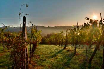 Tecnovino recurso nuevas plantaciones de vinedo