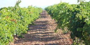 Polinizadores naturales, depósitos ovoides y más ventas en Bodegas Félix Sanz