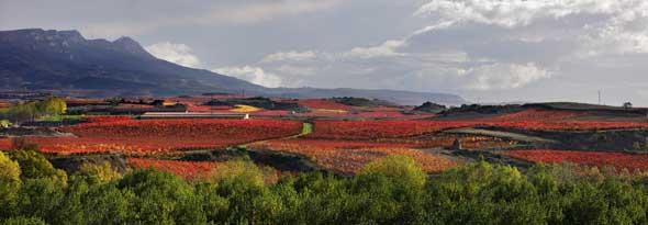 Tecnovino Ruta del Vino de Rioja Alta vinedo otono