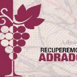 El crowdfunding Recuperemos Adrados pretende recuperar las viñas centenarias de la zona