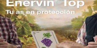 Enervin Top de Basf combina Initium y Metiram garantizando una protección total para la vid
