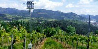 La detección y predicción del mildiu, un proyecto de I+D específico para Rioja