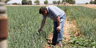 El asociacionismo de los productores, un aspecto a fomentar en la nueva PAC según Cooperativas de Castilla-La Mancha